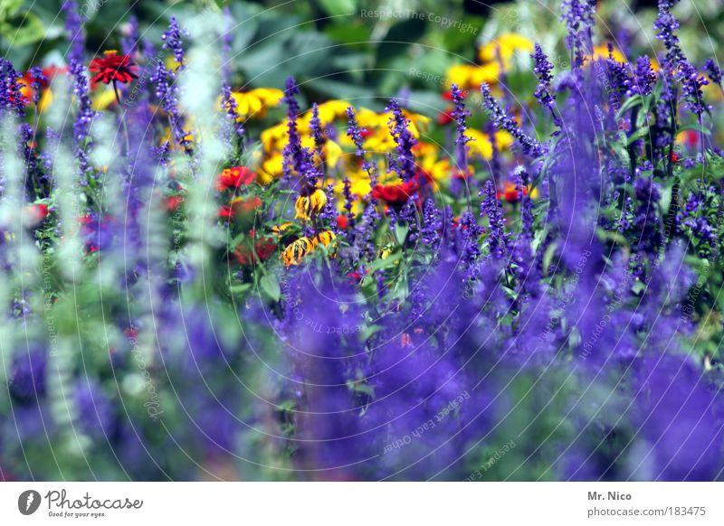 colours Außenaufnahme Natur Pflanze Frühling Sommer Herbst Blume Park Umwelt gelb blau violett mehrfarbig frisch blühen farbe Jahreszeiten leuchtend sommerlich