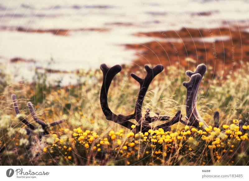 1-2-3-4 Eckstein ... Umwelt Natur Landschaft Pflanze Tier Urelemente Erde Wiese Hügel Küste Seeufer Flussufer Wildtier warten Tierliebe Versteck Suche Rentier
