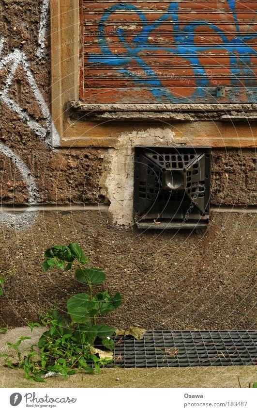 Gamat Wand Haus Gebäude Architektur Osten Deutschland Friedrichshain Altbau DDR Gamat Außenwandheizer Fenster Jalousie geschlossen Grünpflanze Pflanze alt