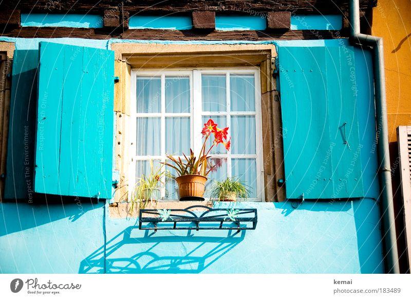 Blau gemacht blau Pflanze rot Sonne Blume Haus Farbe gelb Fenster Wand Mauer Ausflug Fröhlichkeit leuchten Blühend Schönes Wetter