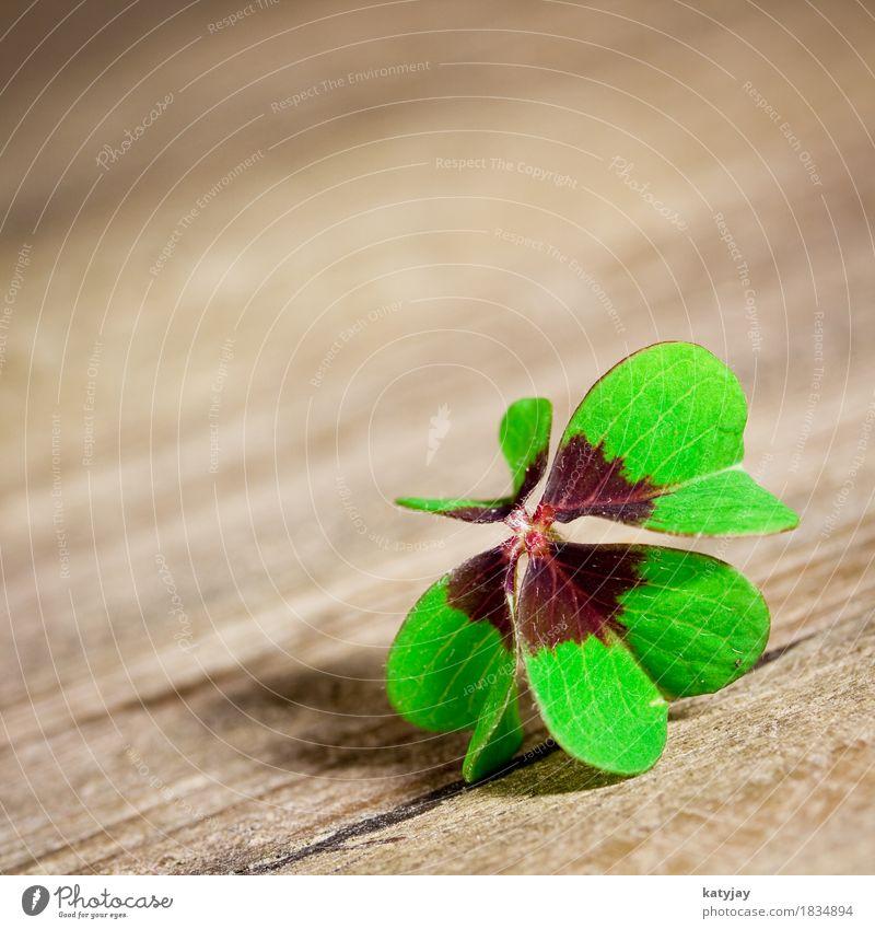 Kleeblatt klee kleeblatt glück glücksklee holz tisch makro holztisch grün blätter vierblättrig neujahr silvester sylvester glückwunsch geburtstag muttertag