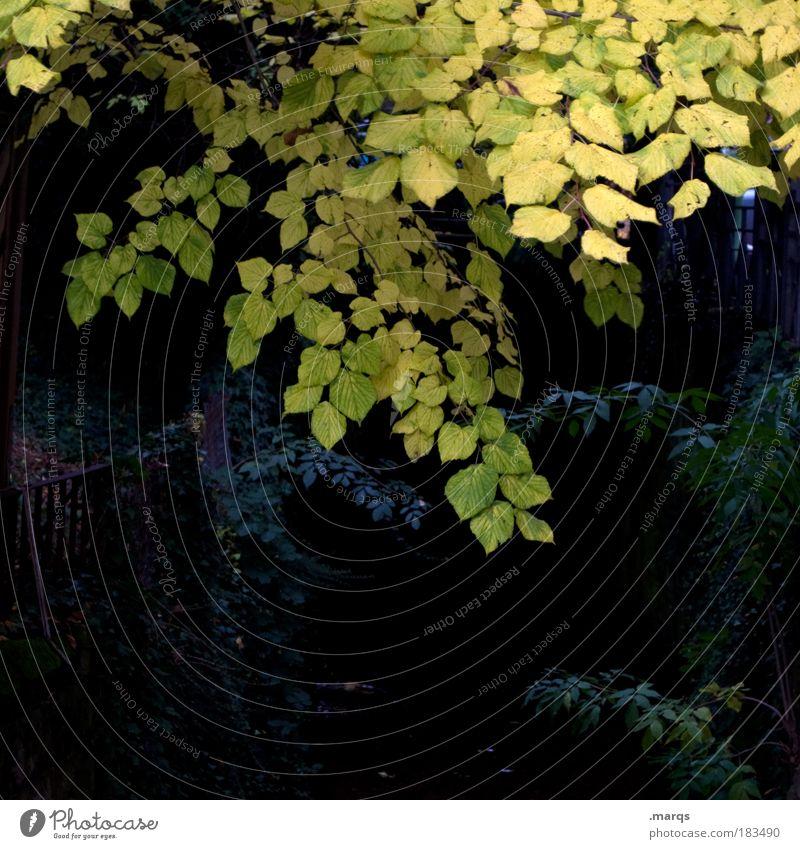 Darkness Farbfoto Außenaufnahme Menschenleer Textfreiraum unten Dämmerung Ausflug Natur Herbst Pflanze Baum Sträucher verblüht dunkel gelb schwarz Angst kalt