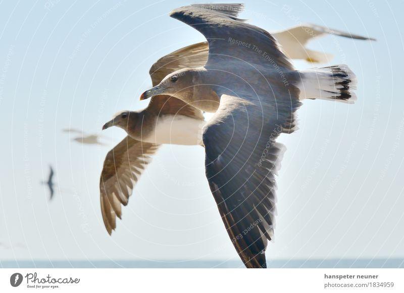 Möven Natur blau Ferne Umwelt Leben Bewegung fliegen Vogel Zusammensein Horizont Tierpaar Wildtier ästhetisch Flügel Energie Geschwindigkeit