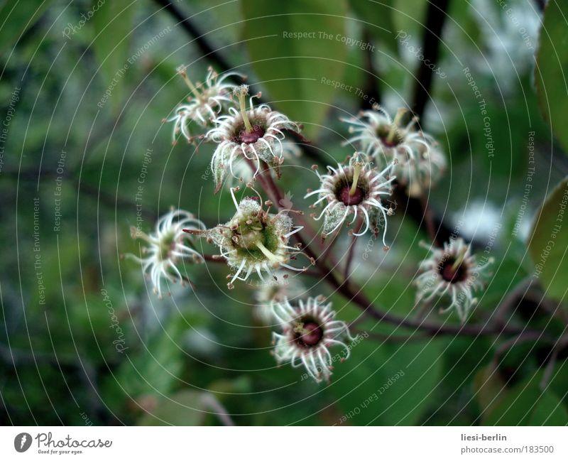 Vergänglichkeit Natur alt weiß grün schön Pflanze Sommer Blume Wald Umwelt Wiese Herbst Frühling Blüte Park braun