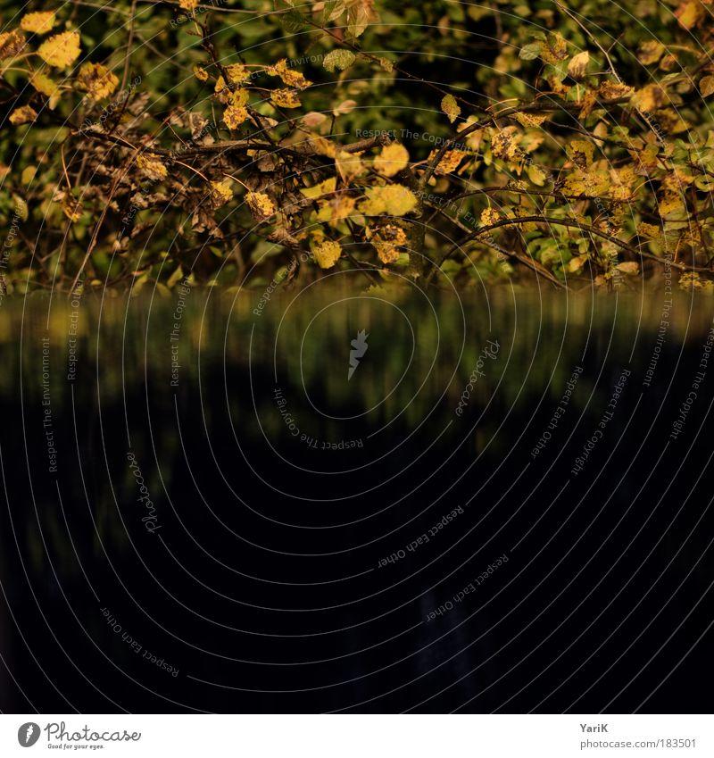 trügerische trübe Natur Wasser Pflanze Blatt gelb Wald dunkel Herbst braun Sträucher Spiegelbild Täuschung schlechtes Wetter Wildpflanze beeinflussen
