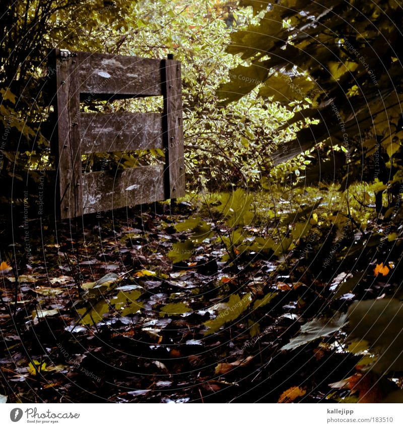 hannibal ante portas Natur Pflanze Landschaft Blatt Wald Umwelt Herbst Garten Zeit Park Tür offen Sträucher Zukunft Ziel Zaun