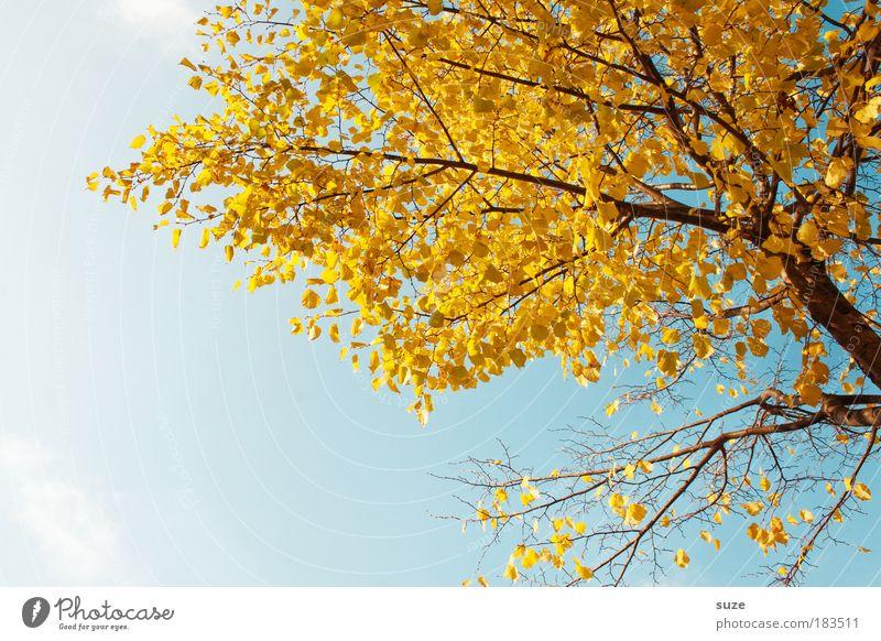 Herbstgold Umwelt Natur Pflanze Himmel Baum Blatt alt ästhetisch Zeit Herbstlaub herbstlich Jahreszeiten Färbung Herbstbeginn Zweige u. Äste Farbfoto mehrfarbig