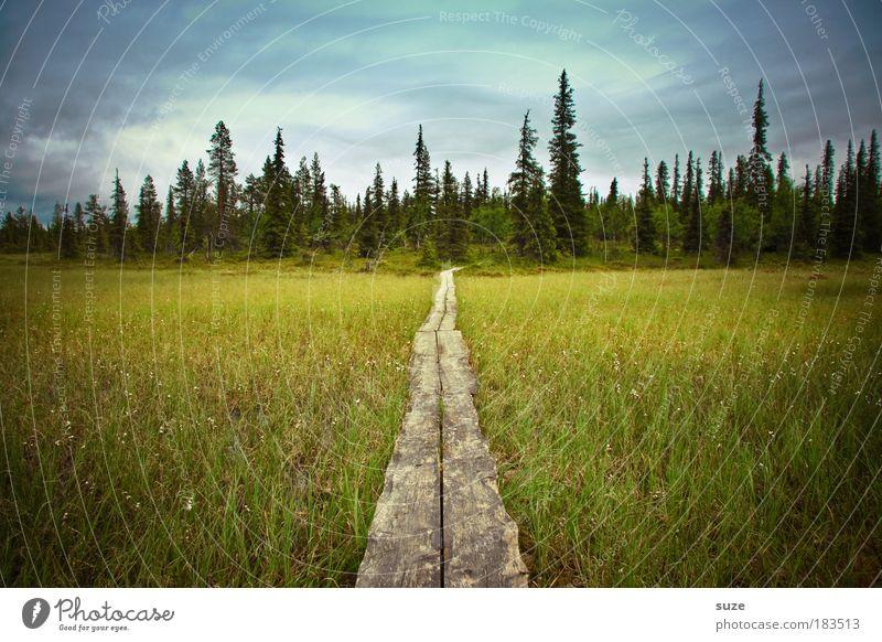 Mein Weg Natur Pflanze Ferien & Urlaub & Reisen Einsamkeit Wald Verkehrswege Landschaft Umwelt Holz Wege & Pfade Zeit Ausflug wandern Erfolg Tourismus Klima