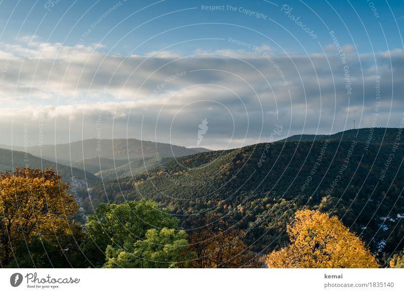 Pfälzerwald in wunderschön Himmel Natur Ferien & Urlaub & Reisen Pflanze Landschaft Baum Wolken Ferne Wald Berge u. Gebirge Wärme gelb Umwelt Herbst Tourismus