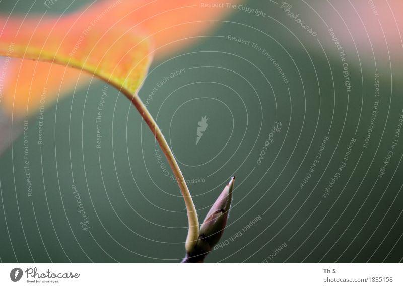 Blatt Natur Pflanze Herbst Bewegung Blühend verblüht ästhetisch authentisch einfach elegant Fröhlichkeit frisch natürlich grün orange rosa Gelassenheit geduldig