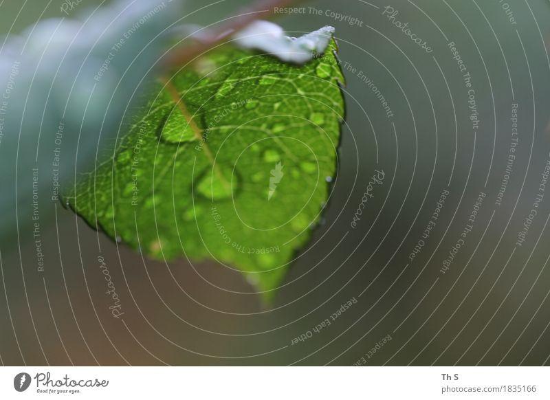 Regen Natur Pflanze grün Blatt ruhig Winter Herbst natürlich braun frisch elegant ästhetisch authentisch einzigartig nass