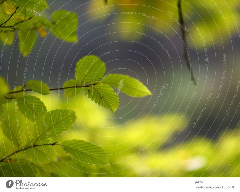 alles wird grün Natur schön Baum Pflanze Sommer Farbe Blatt ruhig Landschaft Herbst Park Zufriedenheit Klima natürlich frisch