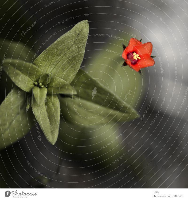 kleine Rote *90* Farbfoto Außenaufnahme Nahaufnahme Detailaufnahme Makroaufnahme Menschenleer Textfreiraum unten Tag Schwache Tiefenschärfe Umwelt Natur