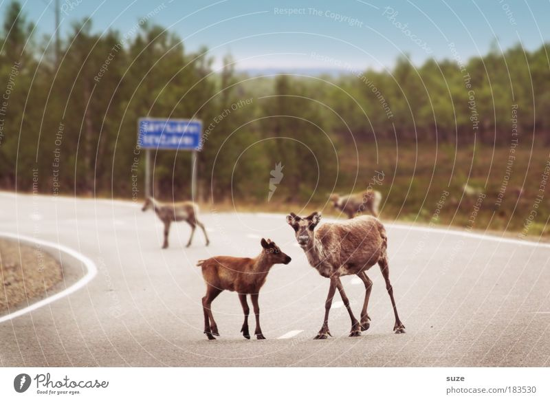 Streetworker Ausflug Umwelt Natur Pflanze Tier Verkehr Verkehrswege Straßenverkehr Nutztier Wildtier Tiergruppe Herde Tierfamilie warten Neugier Sicherheit