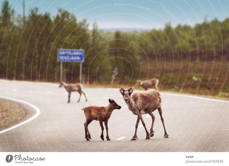 Streetworker Natur Pflanze Tier Umwelt Tierjunges Straße Verkehr Schilder & Markierungen Wildtier warten Ausflug bedrohlich Tiergruppe Sicherheit Neugier