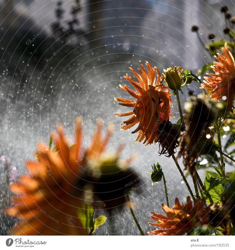 bewässern Farbfoto mehrfarbig Außenaufnahme Detailaufnahme Makroaufnahme Reflexion & Spiegelung Sonnenlicht Natur Landschaft Pflanze Urelemente Wasser