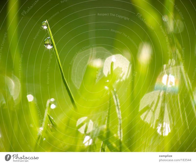 Im Frühtau grün Pflanze ruhig Wasser Reflexion & Spiegelung Erholung Gras Licht Sonnenstrahlen Wassertropfen rein natürlich deutlich Tau Halm Sinnesorgane
