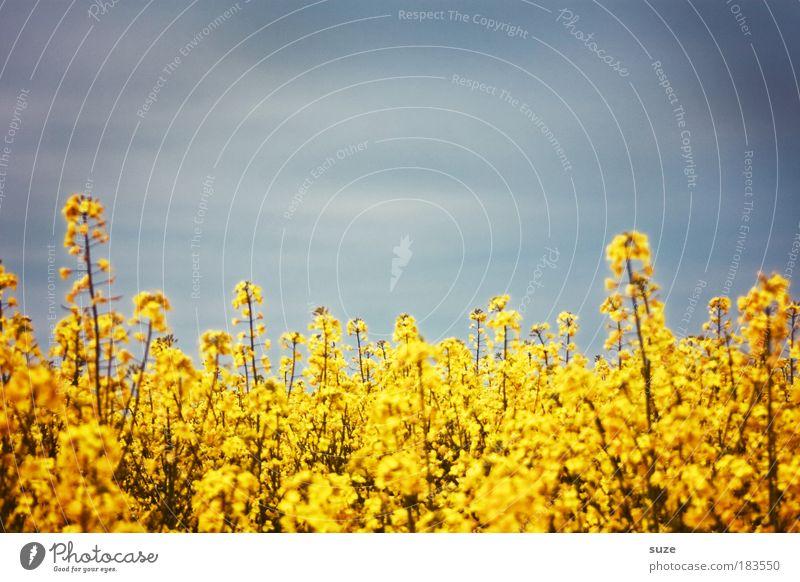 Ich ess Blumen ... Farbfoto mehrfarbig Außenaufnahme abstrakt Muster Menschenleer Textfreiraum oben Tag Öl Ernährung Bioprodukte Energiewirtschaft Umwelt Natur
