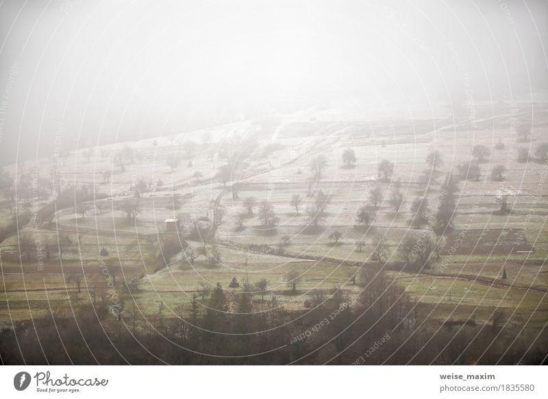 Apfelgarten im Spätherbst. Erster Schnee gelegt Natur Pflanze weiß Baum Landschaft Wolken Ferne Winter Berge u. Gebirge Umwelt Wege & Pfade Wiese Herbst Gras