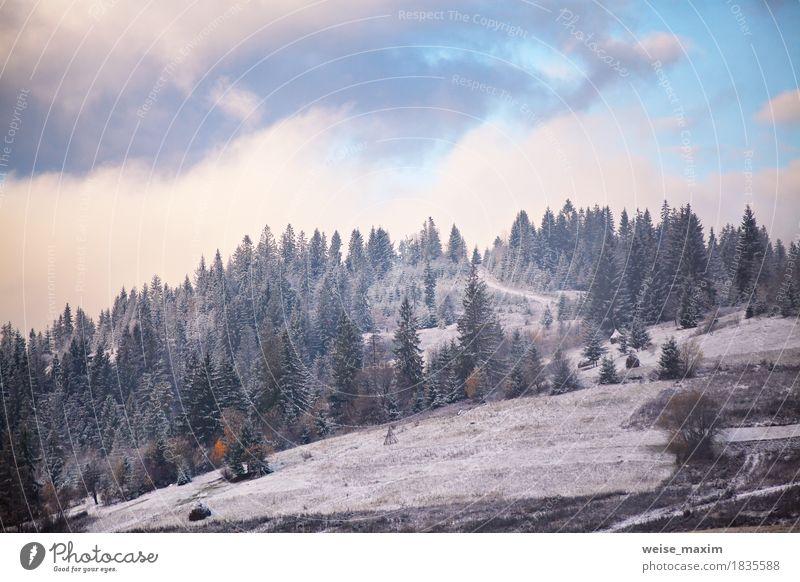 Erster Schnee im Herbst. Schneefälle in Bergen Natur Ferien & Urlaub & Reisen Pflanze weiß Baum Landschaft Wolken Winter Berge u. Gebirge Umwelt Wege & Pfade