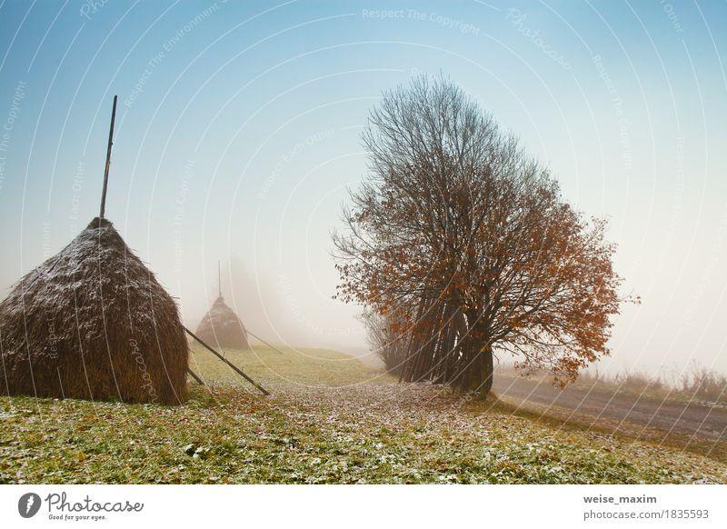 Erster Herbstschnee auf nebelhafter Straße des alpinen Berges Natur Ferien & Urlaub & Reisen Pflanze weiß Baum Landschaft Wolken Berge u. Gebirge Umwelt