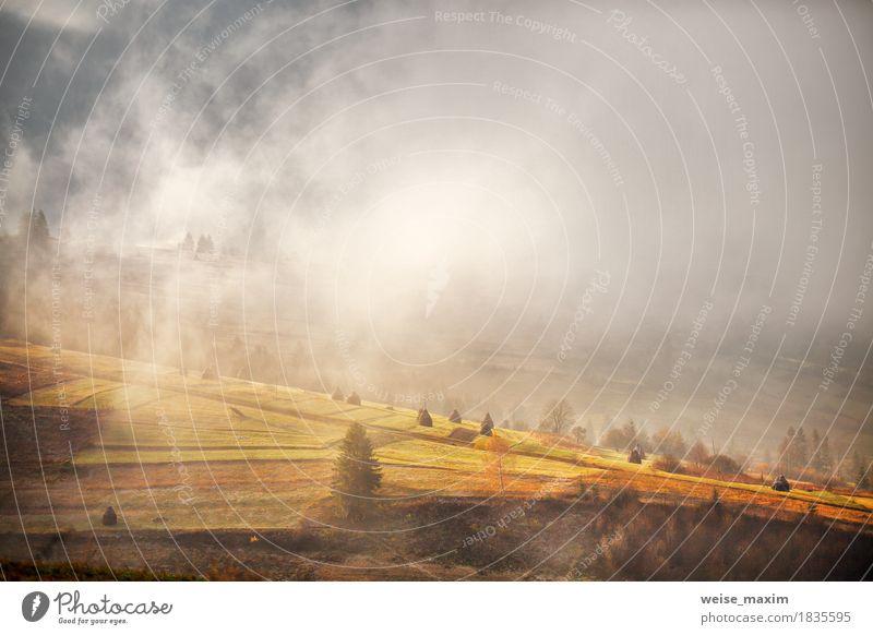 Nebelhafter Morgen Novembers in den Karpatenbergen Natur Ferien & Urlaub & Reisen Pflanze grün weiß Baum Landschaft Wolken Ferne Berge u. Gebirge Umwelt
