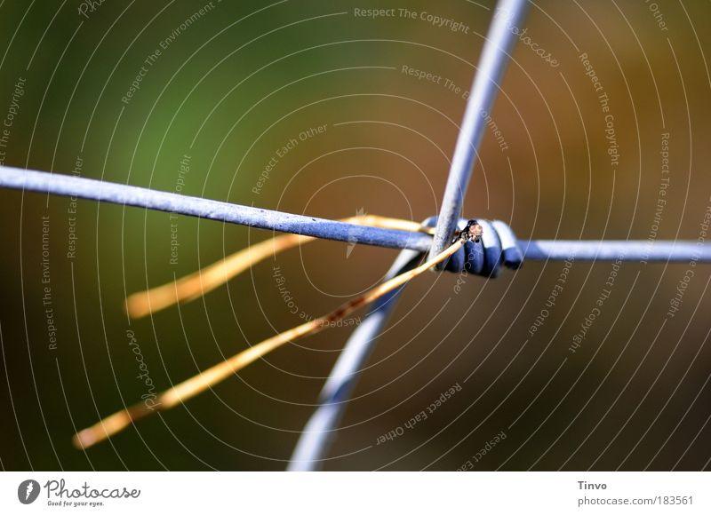 anhänglich Hand Herbst Bewegung Metall festhalten Teilung Außenaufnahme Farbfoto Licht Zaun hängen Kiefer Maschendraht umwickelt Kiefernnadeln
