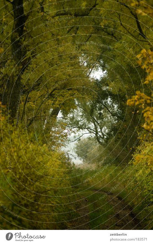 Mönchgut Herbst Mecklenburg-Vorpommern November Rügen Wald Wege & Pfade Fußweg Romantik Ausweg Ziel Waldlichtung Richtung Dämmerung Natur Baum Laubbaum Laubwald