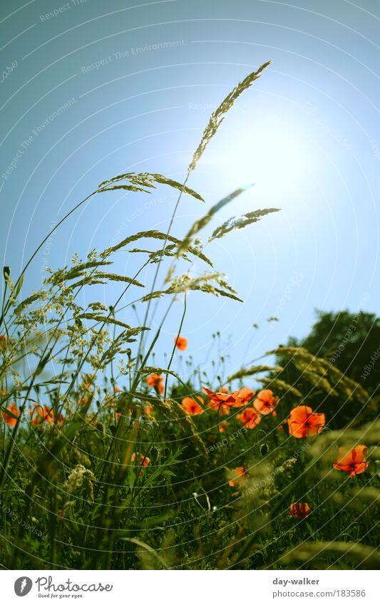 Bei uns ist schön Frühling .. Natur Himmel Baum Sonne Blume grün blau Pflanze rot Wiese Blüte Gras Außenaufnahme Farbfoto Wärme