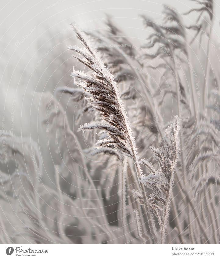 Winter Impressionen Natur Pflanze Weihnachten & Advent Landschaft kalt Innenarchitektur natürlich Gras Schnee Stil Design Eis Dekoration & Verzierung Trauer
