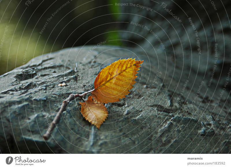 n´ Blatt Natur Baum Pflanze Einsamkeit Herbst Stein träumen Stimmung Park Wetter Schönes Wetter Denkmal Skulptur stagnierend Blattadern