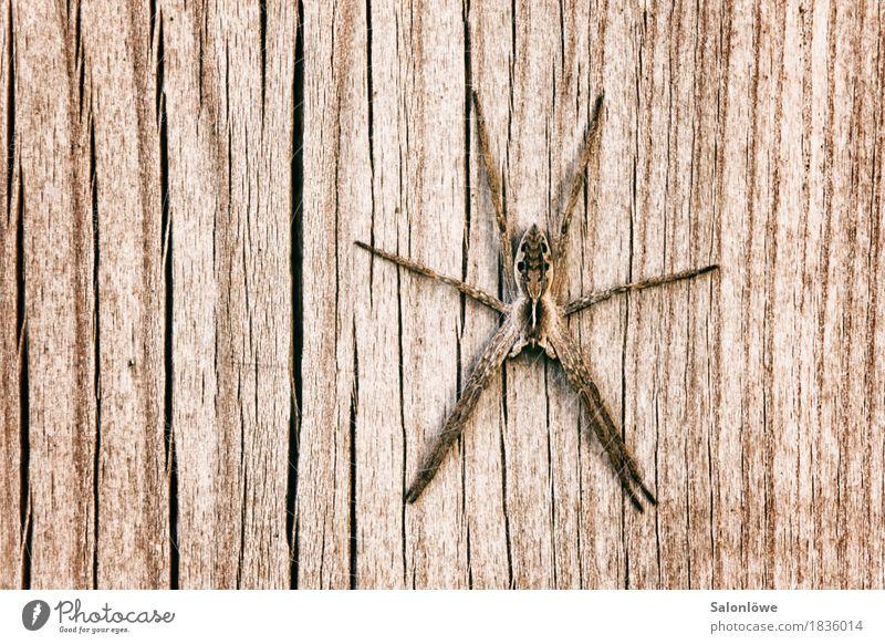 Spiderman is having me Natur Tier Wand Herbst natürlich Holz Mauer Garten braun Fassade Behaarung Angst Kraft sitzen bedrohlich berühren