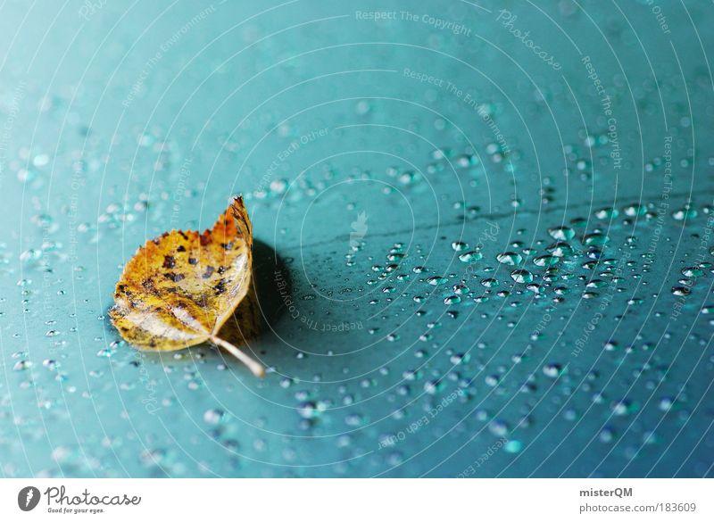 Herbstgruß. Natur schön Blatt Regen Wetter liegen nass Design ästhetisch abstrakt Tropfen Kreativität gefroren Jahreszeiten Klima
