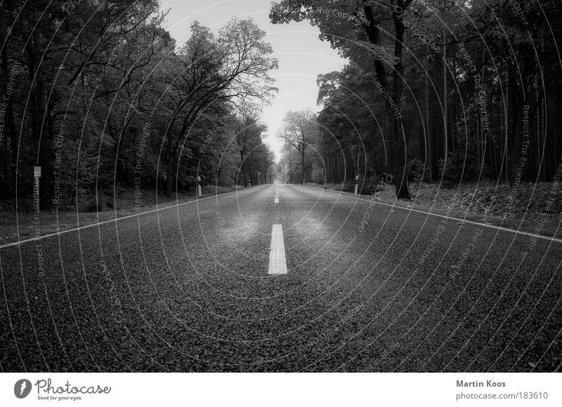 zukunft Baum Wald Ferne Straße Freiheit Bewegung Wege & Pfade Zeit Geschwindigkeit Zukunft fahren Ziel Asphalt Verkehrswege Mobilität Rennbahn