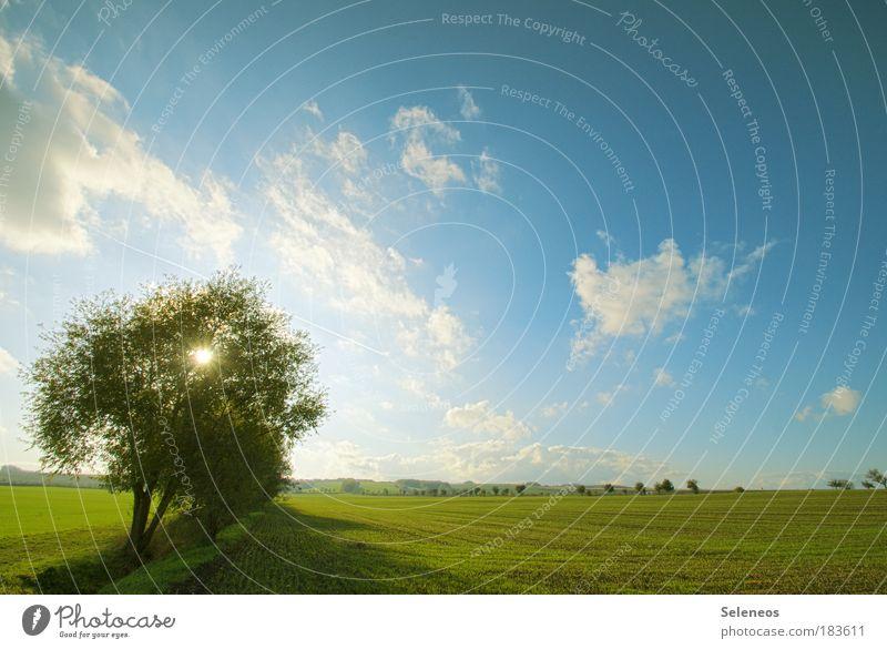 Lichtblick Ferien & Urlaub & Reisen Ausflug Ferne Freiheit Umwelt Natur Landschaft Himmel Wolken Sonne Klima Wetter Schönes Wetter Pflanze Baum Feld ästhetisch