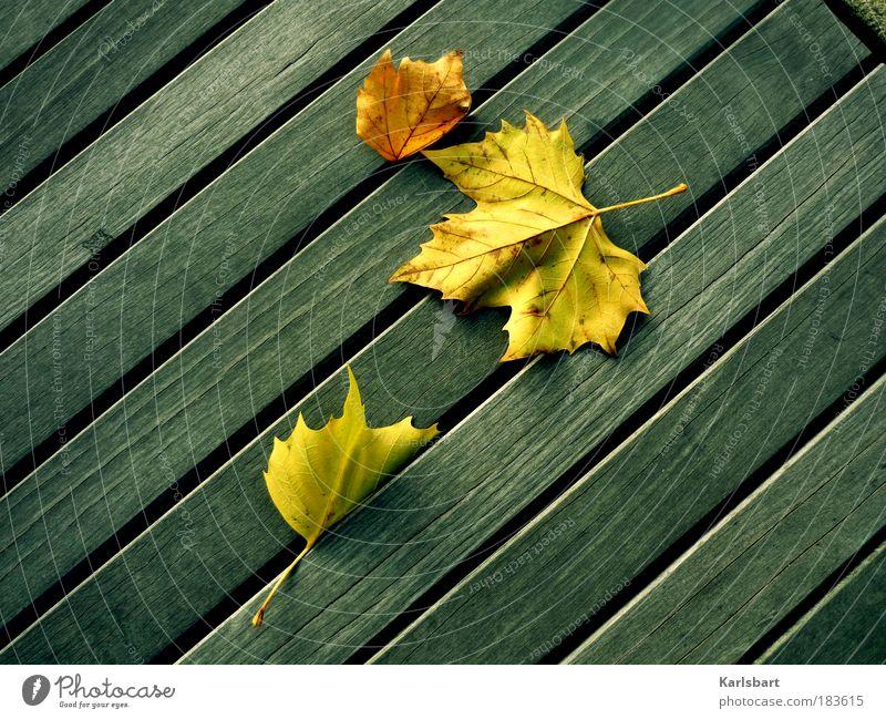 ru shou. Natur schön Ferien & Urlaub & Reisen ruhig Blatt Leben Erholung Herbst Bewegung Garten Holz Linie Zufriedenheit Kraft Design 3