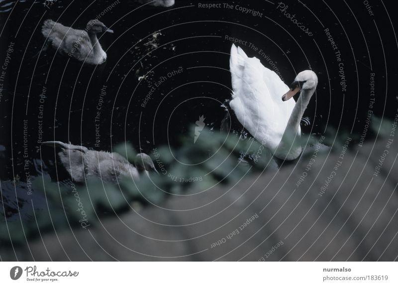 Schwanenleben Farbfoto Gedeckte Farben Außenaufnahme Menschenleer Tag Unschärfe Braten Angeln Jagd Kunst Natur Efeu Park Flussufer Brücke Wahrzeichen Tier Vogel