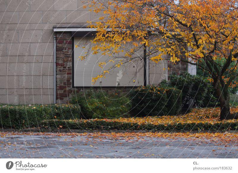 herbst09 Natur Baum Blatt Haus Einsamkeit Straße Herbst Wiese Wand Fenster Traurigkeit Mauer Wind Wetter Umwelt geschlossen