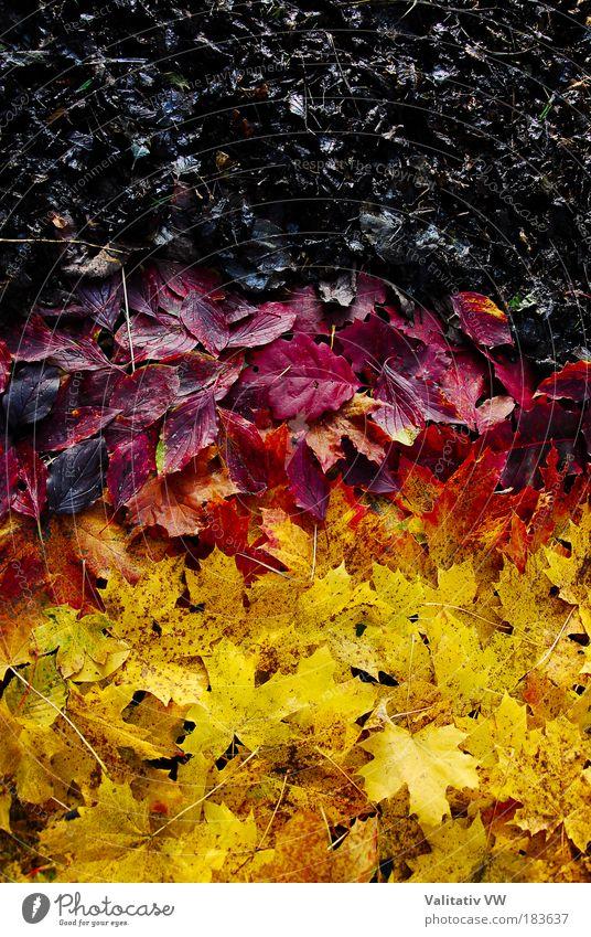 herbstlich deutsche Flagge Natur rot Blatt schwarz gelb Farbe Herbst Mensch Kontrast Deutschland Umwelt gold Zukunft Fahne Deutsche Flagge Nationalflagge