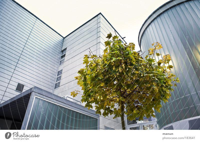 David und Goliath Natur Stadt Baum Umwelt Architektur Herbst natürlich Gebäude klein Fassade Design Wachstum modern Perspektive bedrohlich Hoffnung