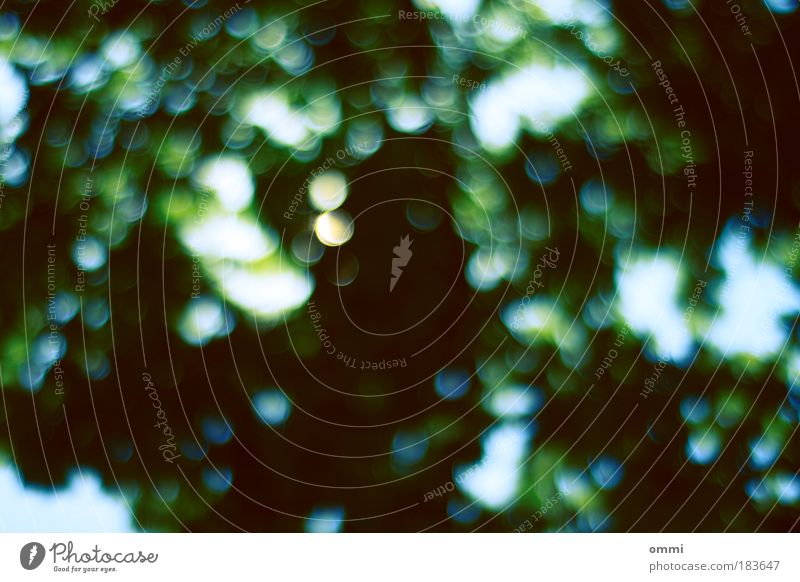 Blätterdach mit Blende 1.8 Natur grün weiß schön Sommer Blatt Erholung Umwelt Bewegung träumen hell Hintergrundbild natürlich frisch Fröhlichkeit Wandel & Veränderung