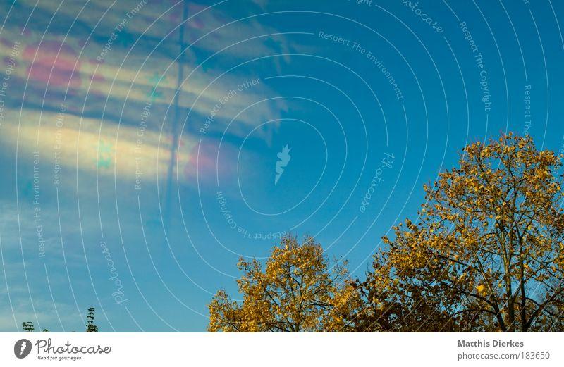 Sonne Baum Reflexion & Spiegelung alternativ Leuchtspur Reflektor mehrfarbig orange Umweltverschmutzung atomare Verseuchung Saurer Regen Gardine