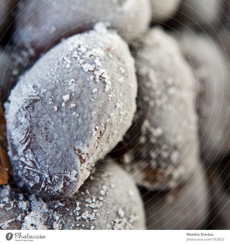 Pflaumen weiß blau Sommer kalt Eis Frucht süß gefroren lecker Ernte frieren Vitamin Wespen robust Haltbarkeit