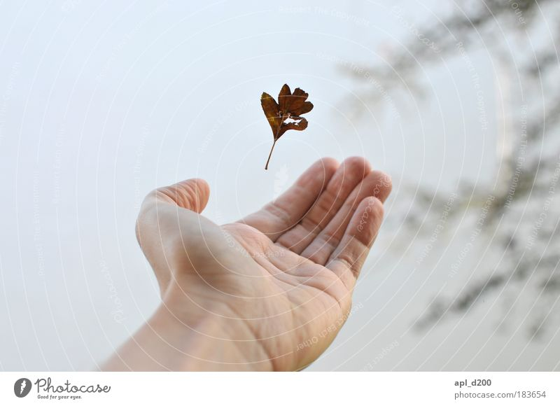 catch me if you can Mensch maskulin Junger Mann Jugendliche Arme Hand 1 18-30 Jahre Erwachsene Umwelt Natur Herbst Winter Blatt fallen fangen ästhetisch elegant