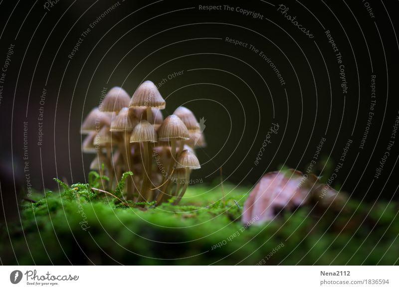Gruppenzwang Umwelt Natur Pflanze Urelemente Erde Herbst Moos Park Wald nass Akzeptanz Schutz Geborgenheit Einigkeit Zusammensein Pilz Pilzhut Menschengruppe