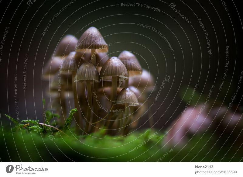 Einigkeit macht stark Natur Pflanze Wald Umwelt Herbst Menschengruppe Zusammensein Wetter Erde mehrere viele Pilz Moos feucht Waldboden Feuchtgebiete