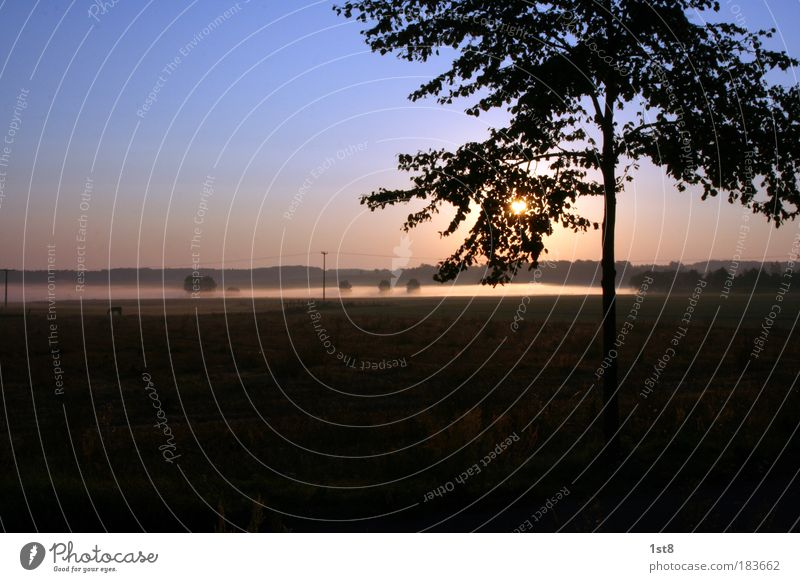 Prärienebel Farbfoto Außenaufnahme Textfreiraum oben Textfreiraum unten Morgen Morgendämmerung Dämmerung Sonnenlicht Gegenlicht Panorama (Aussicht) Natur