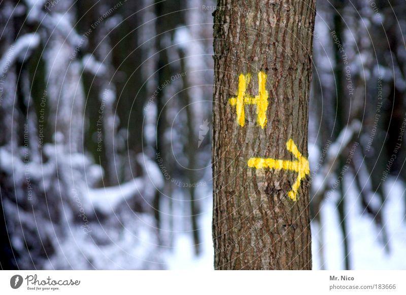H --> Außenaufnahme Umwelt Natur Landschaft Winter Klima Klimawandel Wetter Eis Frost Schnee Baum Wald Holz Zeichen kalt Umweltschutz Schneelandschaft richtung