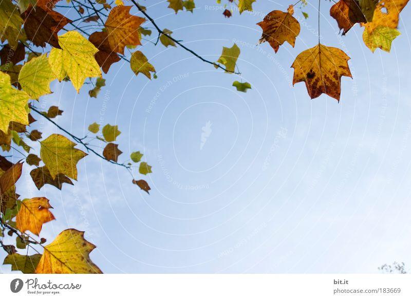 WINDSTÄRKE 3 Natur Pflanze Blatt ruhig Wolken gelb Herbst braun Park gold Wind Schönes Wetter Gelassenheit Wolkenloser Himmel Sturm hängen