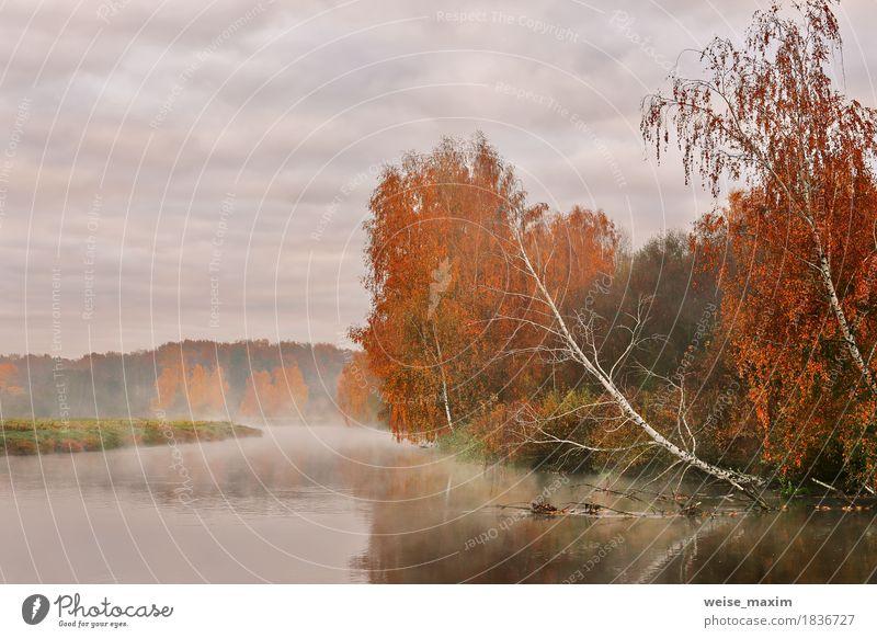 Himmel Natur Ferien & Urlaub & Reisen grün Baum Landschaft rot Blatt Wolken Wald Umwelt gelb Herbst natürlich Gras Freiheit